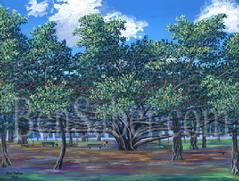 Banyan tree lahaina maui painting picture