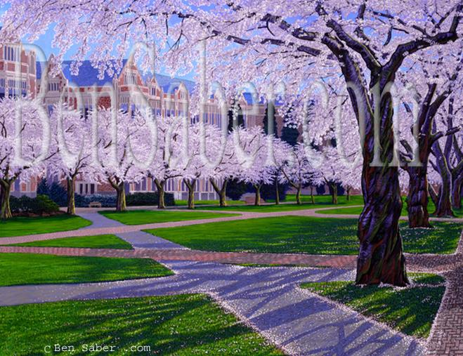 university of washington cherry blossoms quad uw painting picture